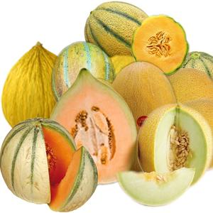 Tante qualità di meloni disponibili tutto l'anno