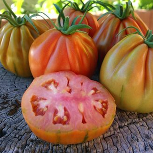 Preferiamo le specialità del Sud Italia, disponiamo di tutte le varietà più particolari di pomodori e pomodorini