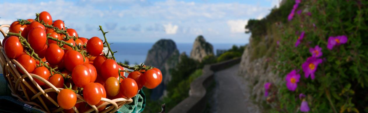 LA MIGLIORE FRUTTA VERDURA PER <strong>Ristoranti-Hotel-Negozi-Bar-Stabilimenti Balneari </strong>